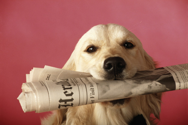 Dog holding newspaper, close-up