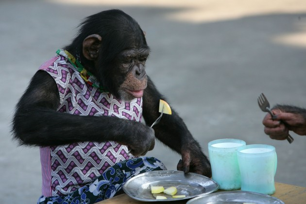 Animals Stay Cool At Chongqing Safari Park
